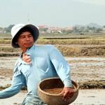 Tâm tình người đi gieo – ĐTGM. Ngô Quang Kiệt