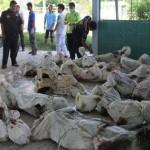 Tai nạn thảm khốc tại Thái Lan – 1 linh mục và 13 thanh niên Việt Nam thiệt mạng.